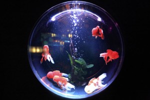 fish-bowl-846060_1280