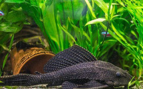 bonne-methode-pour-changer-eau-aquarium