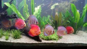 eclairage-aquarium-2