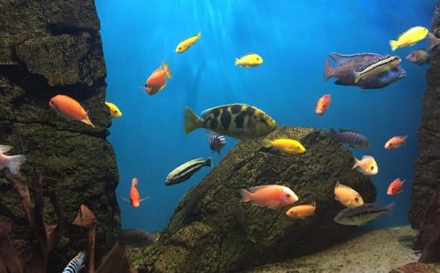 decor-aquarium